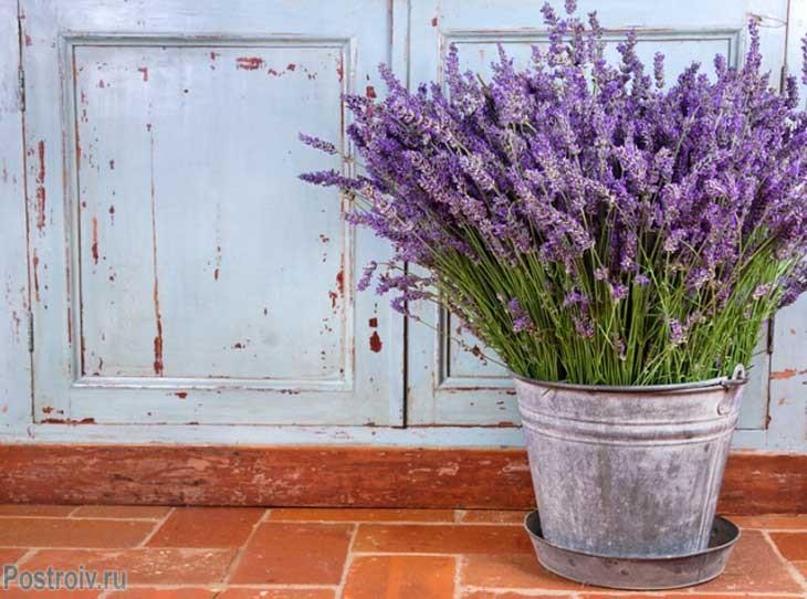Provence16