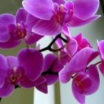 Орхидеи в спальне можно