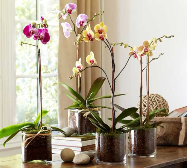 orhidea_vspalne12