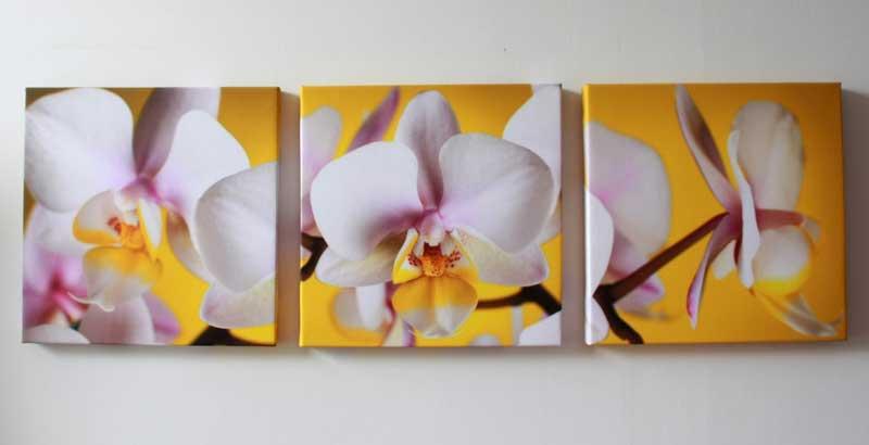 orhidea_vspalne13