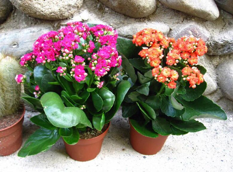 Kogda-mozhno-peresazhivat-cvety18