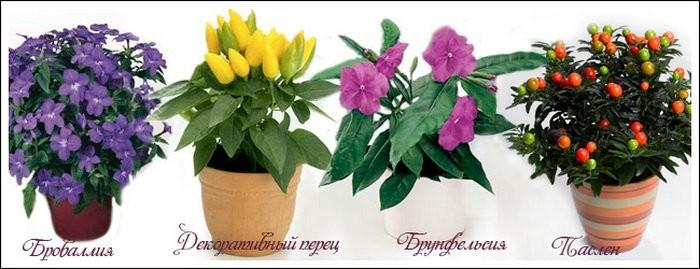 Ядовитые комнатные цветы: фото какие цветы ядовитые, названия