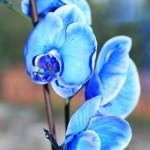 Пересадка орхидеи04