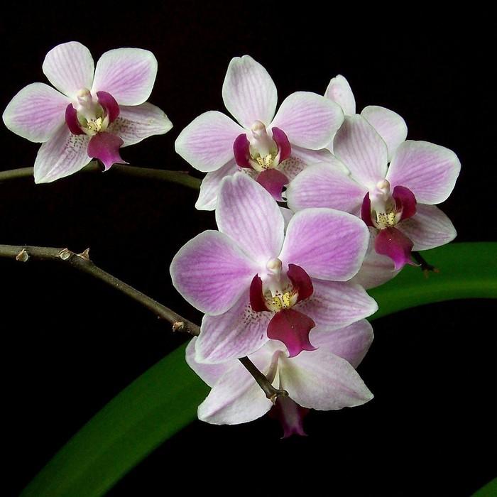 Как пересаживать орхидею пошагово