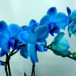 У орхидеи гниют корни, что делать поэтапно
