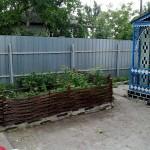 prodam-pletenie-iz-lozy-i-oreshnika-ukrainskiy-tyn--ba87-1379444234920883-15-big