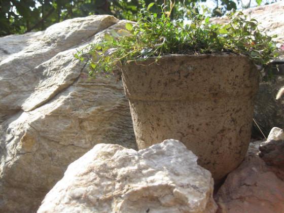 вазон-лобелия-альпийская-горка-560x420