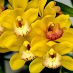 Орхидеи в спальне. Вредно ли держать их в комнате. Фото орхидей