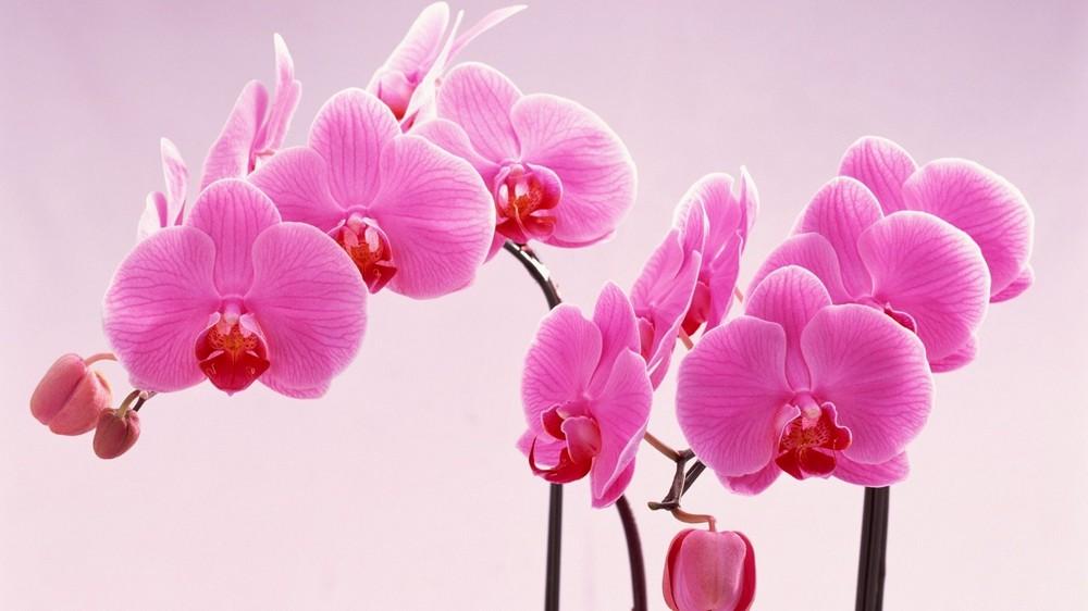 Пересадка_орхидеи04