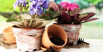 Когда лучше пересаживать комнатные цветы. В какой день