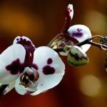 Гниют корни и желтеют листья орхидеи. Как спасти. Поэтапная инструкция