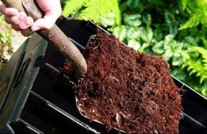 kompost3-300x195