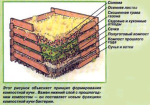 компостная-яма-2-300x210