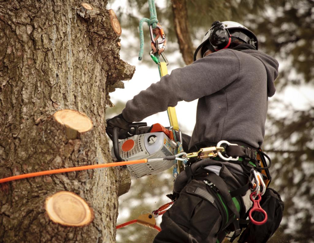 Удаление деревьев с участка 3