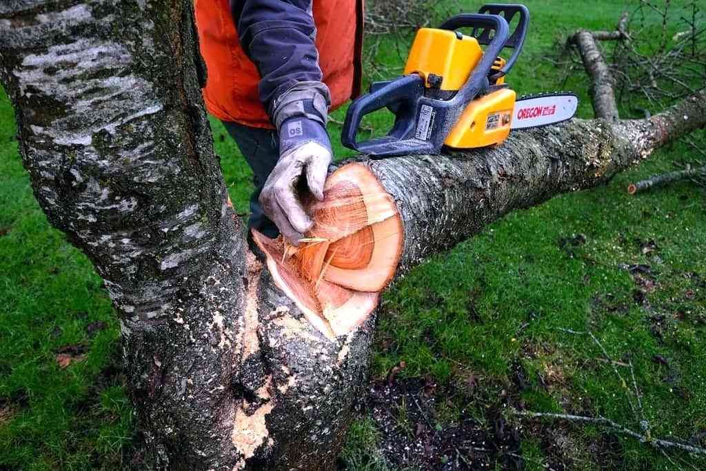 Удаление деревьев с участка 4