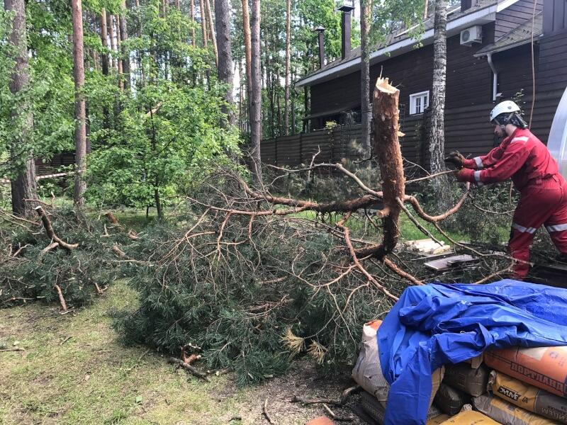 Удаление деревьев с участка