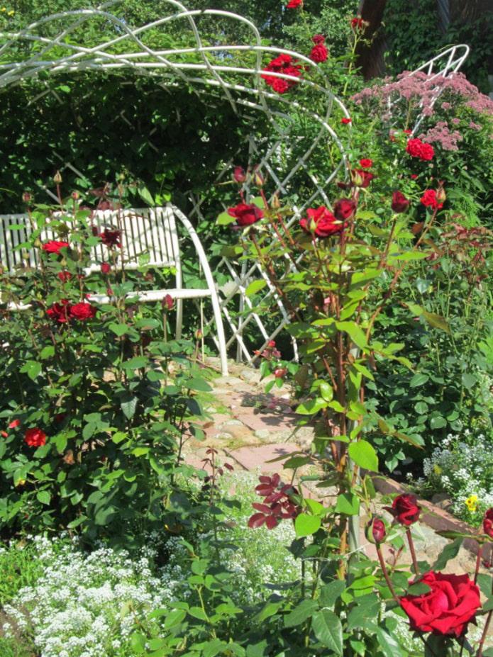 Плиссированные розы вокруг скамейки